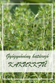 gyógynövények azok fotó pikkelysömör)