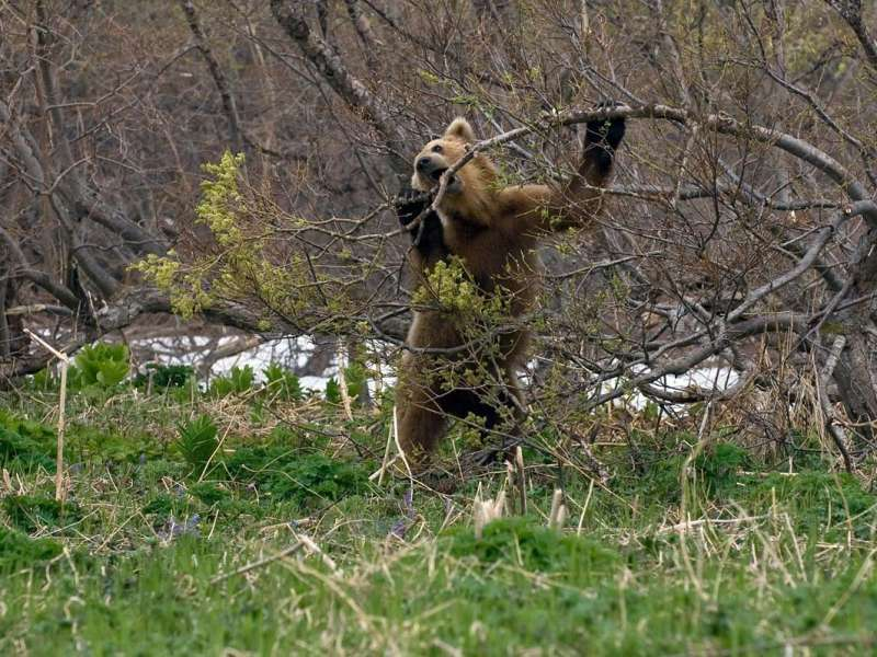 pikkelysömör kezelése bearish)