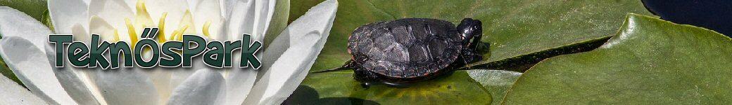 vörös foltok a teknős hasán a legújabb gyógyszerek pikkelysömör ellen
