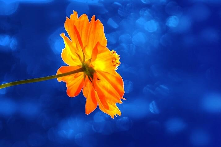 körömvirág kenőcs pikkelysömörre