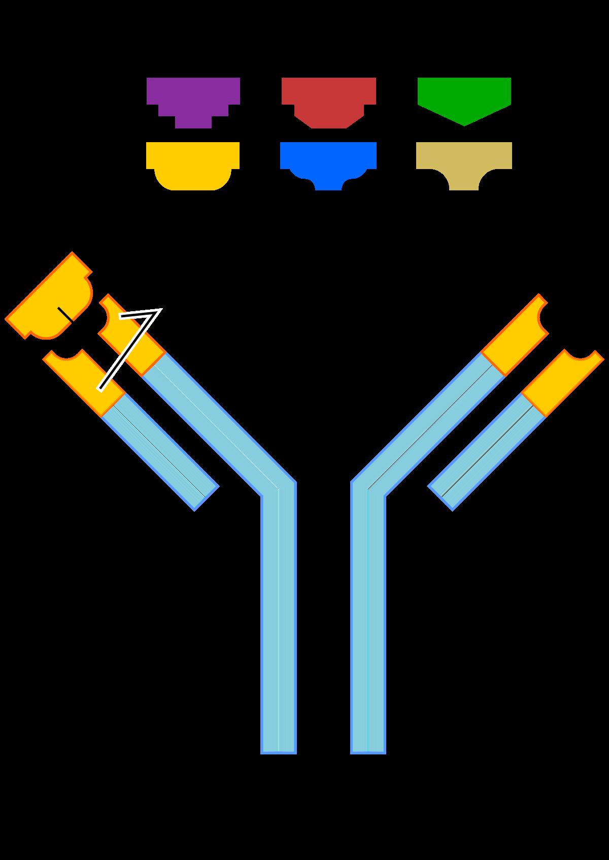 pikkelysömör kezelése monoklonális antitestekkel)